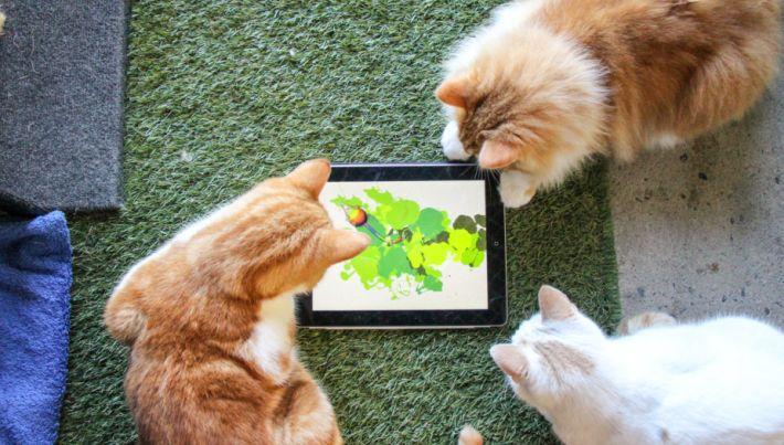 Kediler Icin Ozel Olarak Hazirlanmis Tablet Ve Cep Telefonu